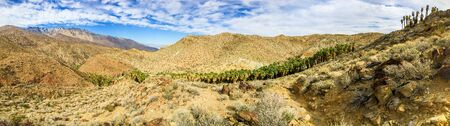 Palm Canyon panorama