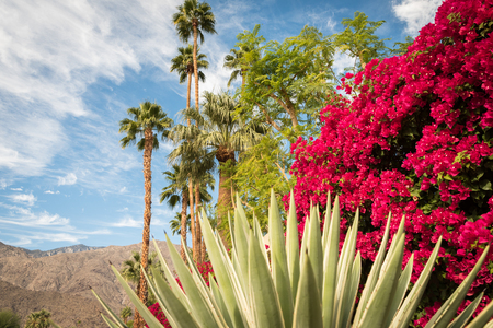 Blooming Palm Springs landscape