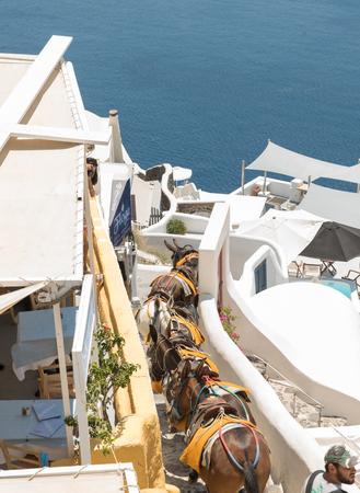 Photo of donkeys descending after delivery on Santorini