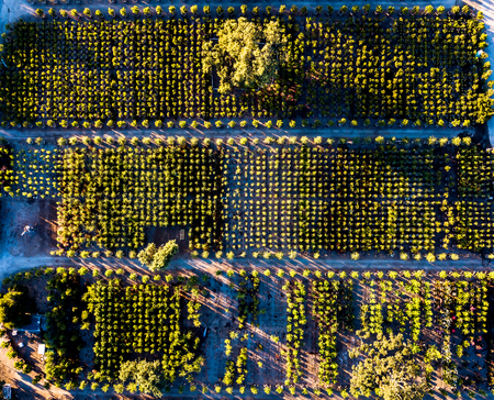 Fruit orchards in Northern California