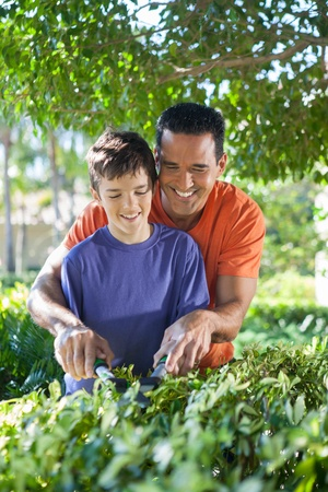 hedge clippers: Hispanic father happily teaches his teenaged son how to use hedge clippers to trim bushes in lush yard.