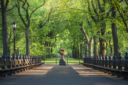 セントラル ・ パーク。セントラル ・ パーク、ニューヨーク市、米国のモール領域の画像