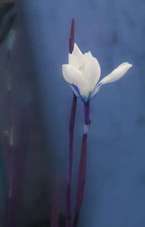 lone flower bud