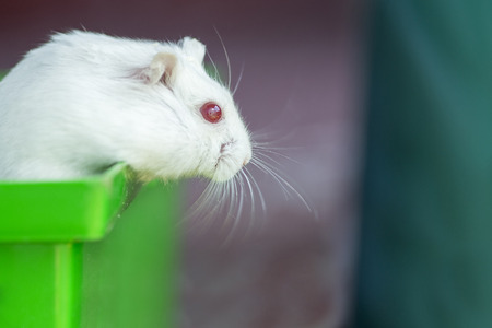 The hamster looks out of the cage Stock Photo