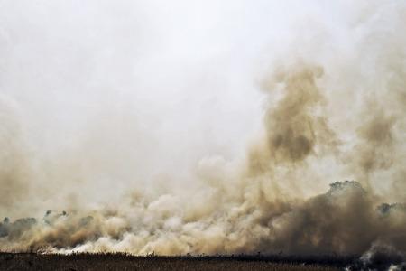 Smoke from a fire in a field Foto de archivo