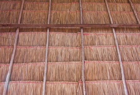 Grass roof. Stock Photo - 7746606