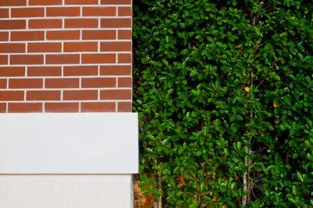 Walls, planting trees photo