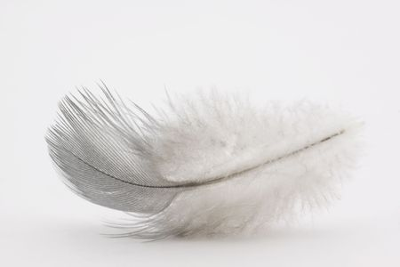 weightless: Feather on white background