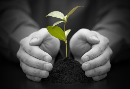 Small plant protected by hands Stock Photo - 9437906