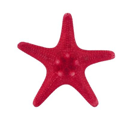 Red starfish photo