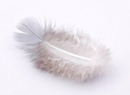mild: Small white feather
