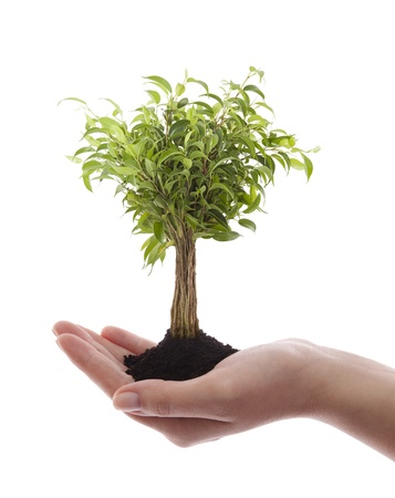 Hand holding green tree isolated on white photo