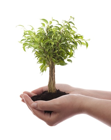 Hands holding green tree isolated on white photo