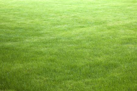 grassy field: green grass background