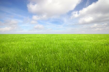sky and grass: Green grass field with bright blue sky