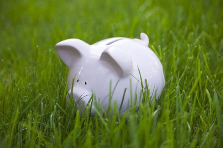 piggy: Piggy bank in green grass Stock Photo