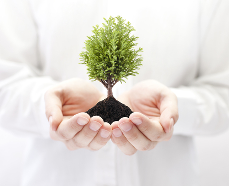 coniferous tree: Growing green tree in hands Stock Photo