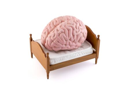 Human brain resting on the bed isolated on white background
