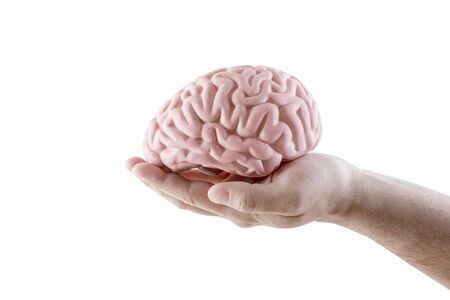 Human brain on hand isolated on white background