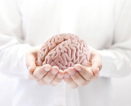 Human brain in hands Stock Photo