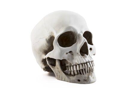 Human skull isolated on white background Stock Photo