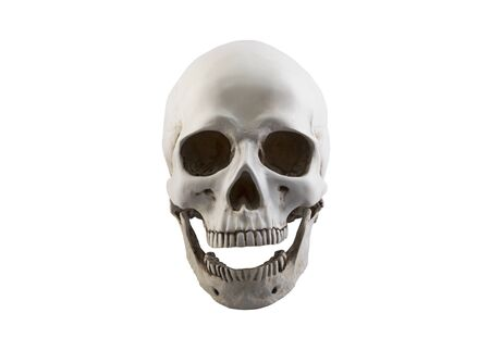 Human skull with open jaw isolated on white background Stock Photo
