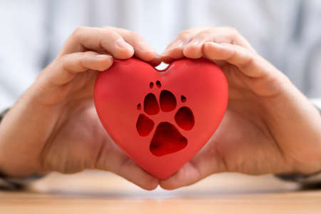 Red heart with dog paw print in hands Stok Fotoğraf