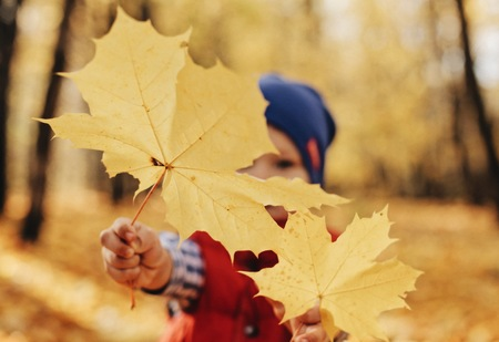 Close-up portrait of cute little child boy holding gold leaf on autumn forest background.