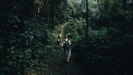 Back view of the group Caucasian man with backpacks going through the forest in Africa. Travelers exploring jungle. Banque d'images
