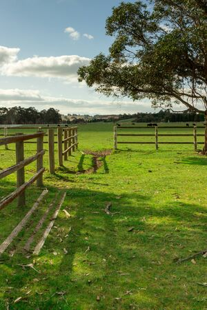 open gate: An open gate leading to pasture with cows.
