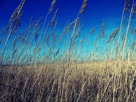 alargamiento: Spring campo con el grano