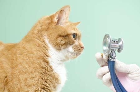 Lovely orange cat waiting for treatment at the vet