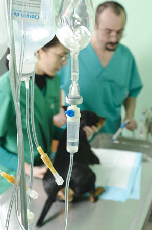 dog receiving treatment on the surgical table