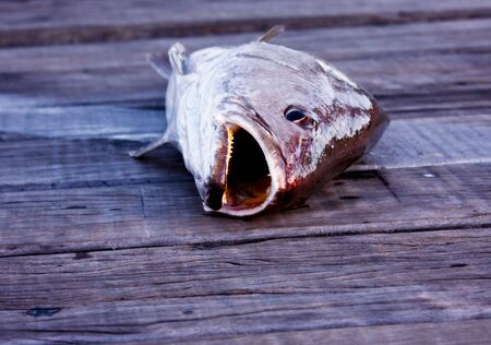 Fish laying on jetty with open mouth  Stock Photo - 13643203