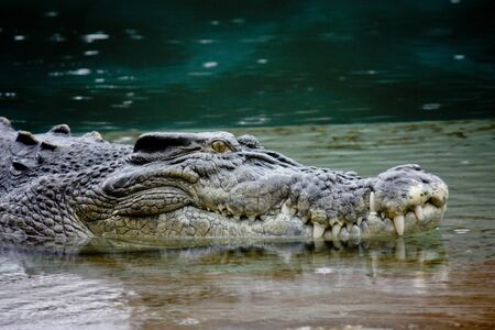Close up of crocodile head in shallow water Stock Photo - 13742924