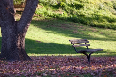 Park bench seat under tree in parkland Stock Photo - 14387184