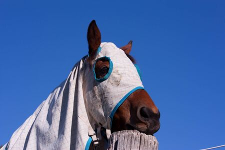 blanket horse: Horse with blanket against blue sky Stock Photo