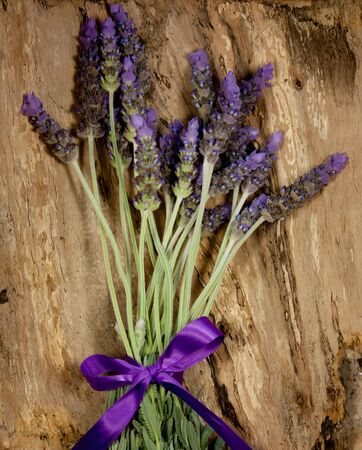 Purple lavender flowers on tree bark Stock Photo - 15129494