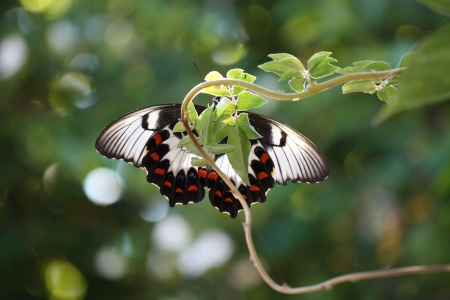 Close up of butterfly underside with decorative wings Stock Photo - 17901979