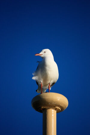 Seagull perched on ferry mast against blue sky