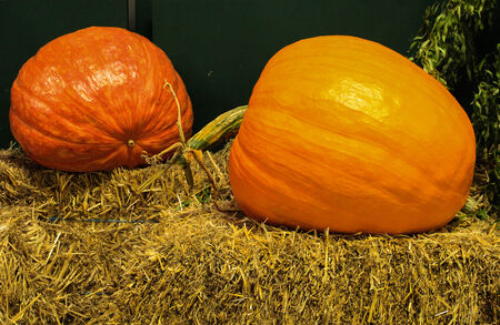 Two large ripe pumpkins on hay bale