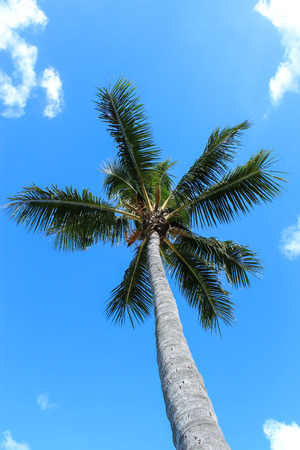 Tropical palm tree against blue sky