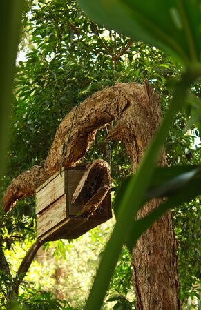 Wooden nesting box for birds and wildlife in tree