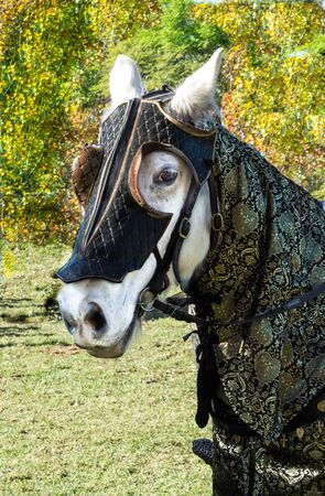 White horse in medieval jousting outfit