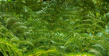 Green fern plants background