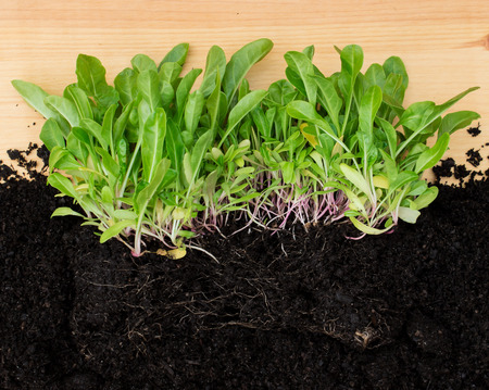 Seedling plants with roots in soil