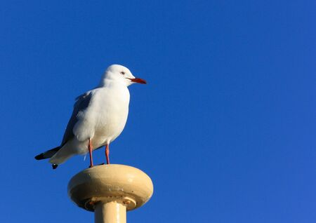 Seagull atop ship mast against blue sky Stock Photo