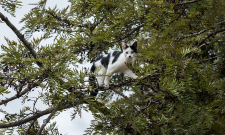 Black and white cat climbing in tree