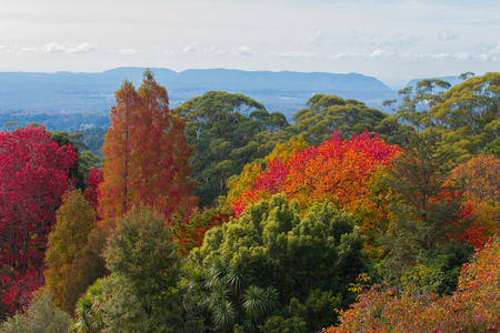 Mt Tomah botanical gardens Blue Mountains Australia in autumn fall
