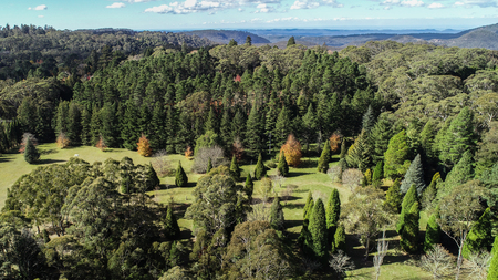 Aerial view of mountain tree garden including eucalypts and conifers Фото со стока